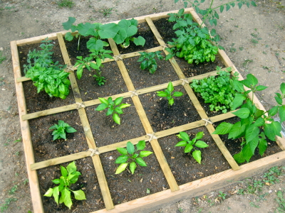 Square Foot Gardening: A Garden for Everyone! | Atlantis ...