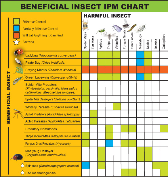 Beneficial Insect IPM Chart