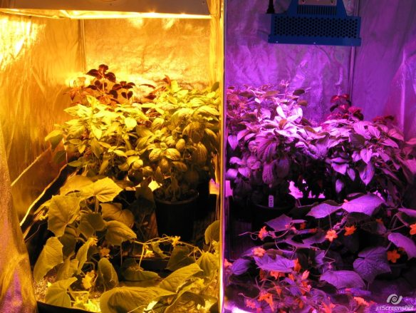 LED Side by Side Trial With Lumi Grow ES330