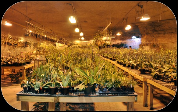 An Amazing Grow Room Built Inside of a Cave: Birds Botanicals