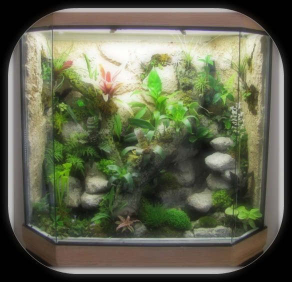 A Vivarium is Like a Living Painting in Your Home